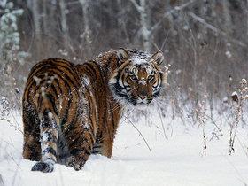 Фото с сайта svistanet.com
