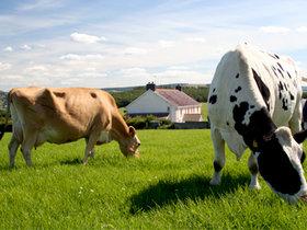 Бизнес-план инвестиционного проекта «Создание фермерского хозяйства по производству молока и мяса»