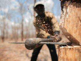 Фото с сайта nividar.com