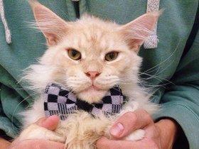 Фото со страницы «Коты счастья» в Facebook