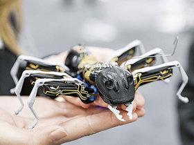 Фото с сайта robo-sapiens.ru