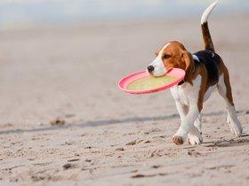 Фото с сайта animal-store.ru