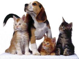 ФОТО: Бизнес-план создания зоомагазина и ветеринарной клиники