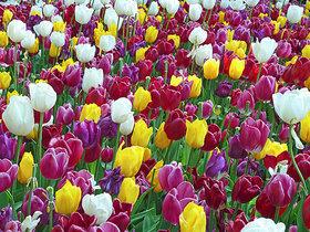Фото с сайта florapedia.ru