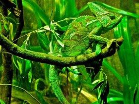 Фото с сайта okjdiscoveries.com
