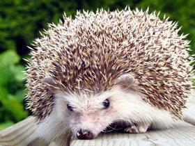 Фото animalstrade.ru