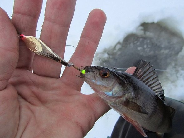 Фото с сайта naprud.com