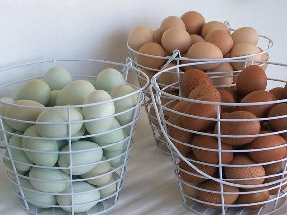 Фото с сайта evensong-farm.com