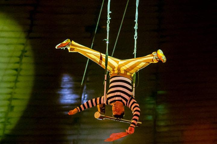 Фото с сайта circus-krasnoyarsk.ru