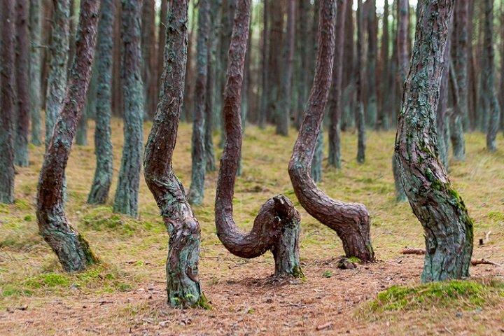Фото с сайта img-fotki.yandex.ru