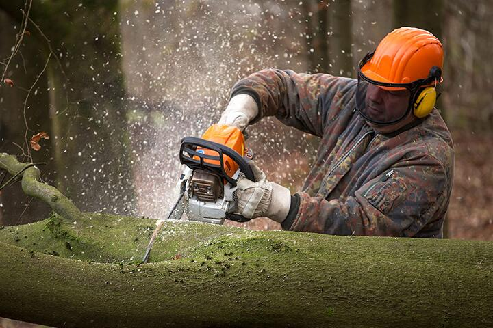 Фото с сайта chainsawgeek.com
