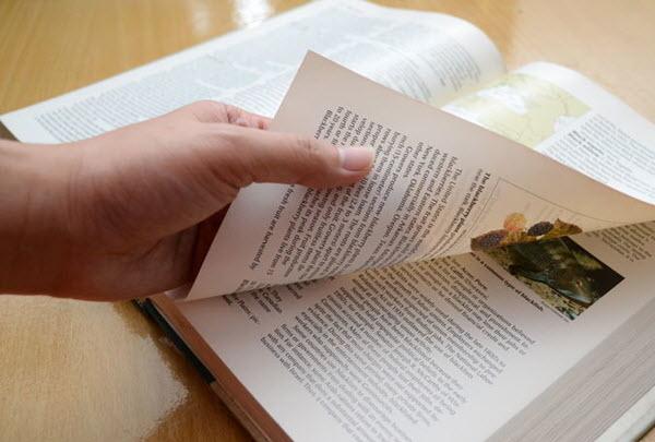 Фото с сайта ru.wikihow.com