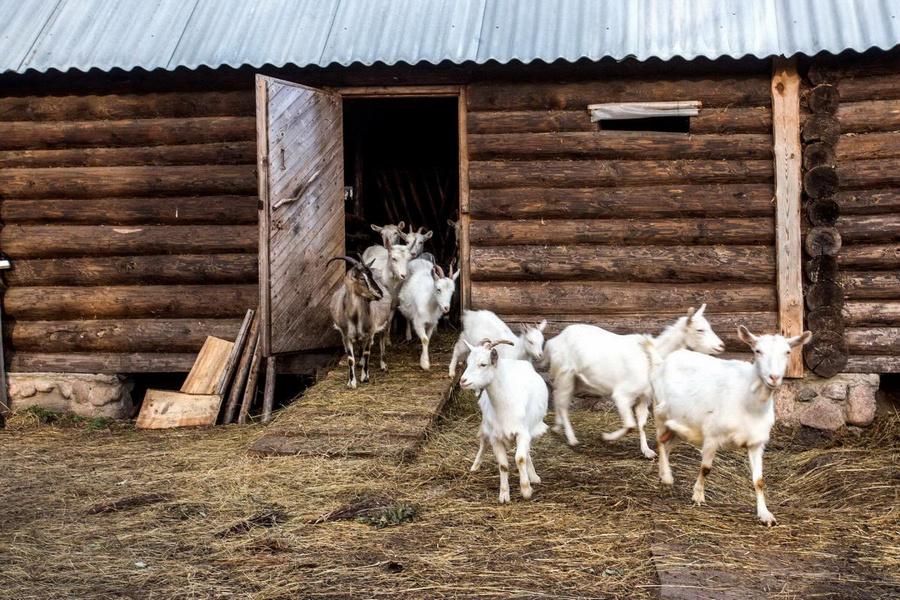 Фото с сайта usadby.by