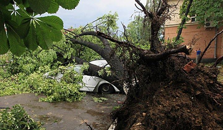 Последствия урагана 13 июля в 2016 в Минске. Фото c cайта belta.by