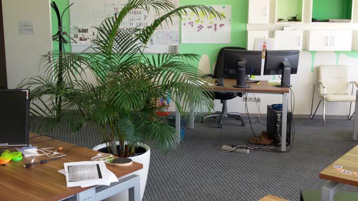 Комнатная пальма. Фото из личного архива героя