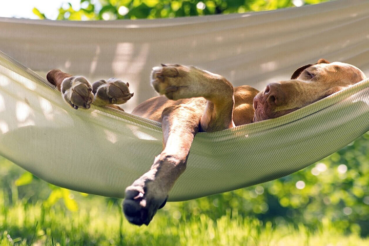 Фото: treehouselife.com
