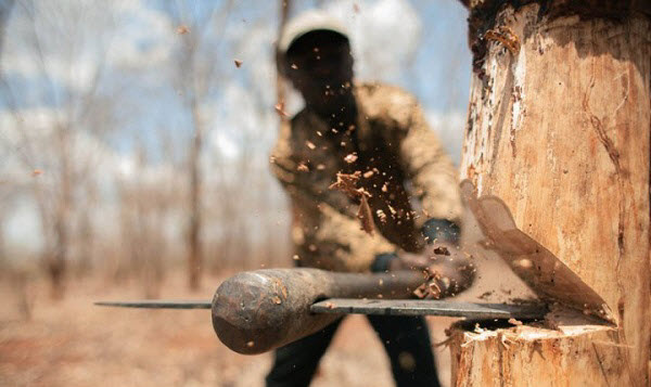 Фото с сайта vicer.ru