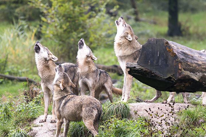 Фото с сайта vozim.by