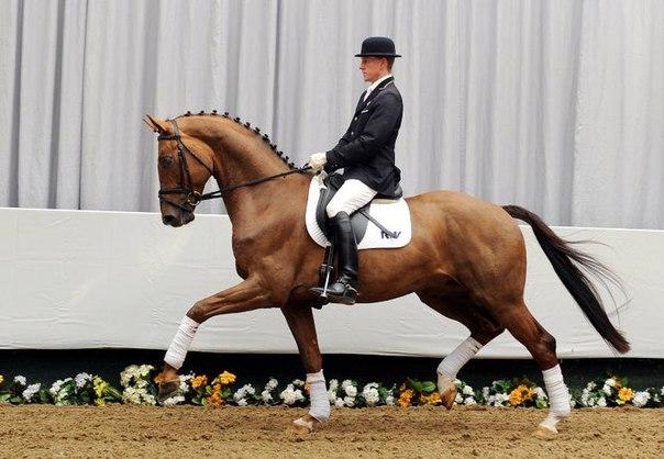 Фото со страницы сообщества HorseList ВКонтакте
