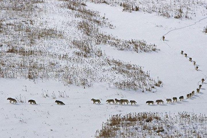 Фото с сайта ic.pics.livejournal.com.jpg