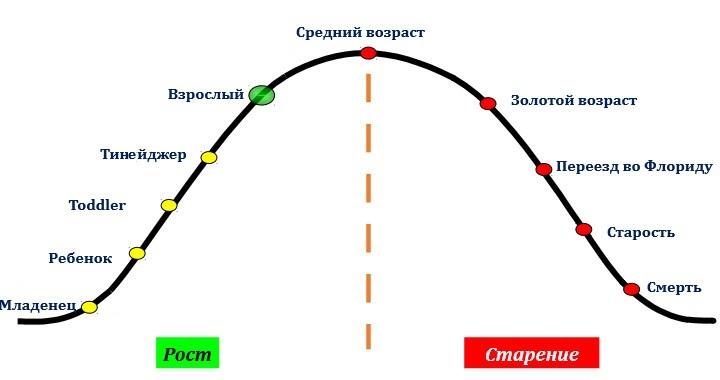 Жизненный цикла американца. Слайд из презентации Павла Голенченко