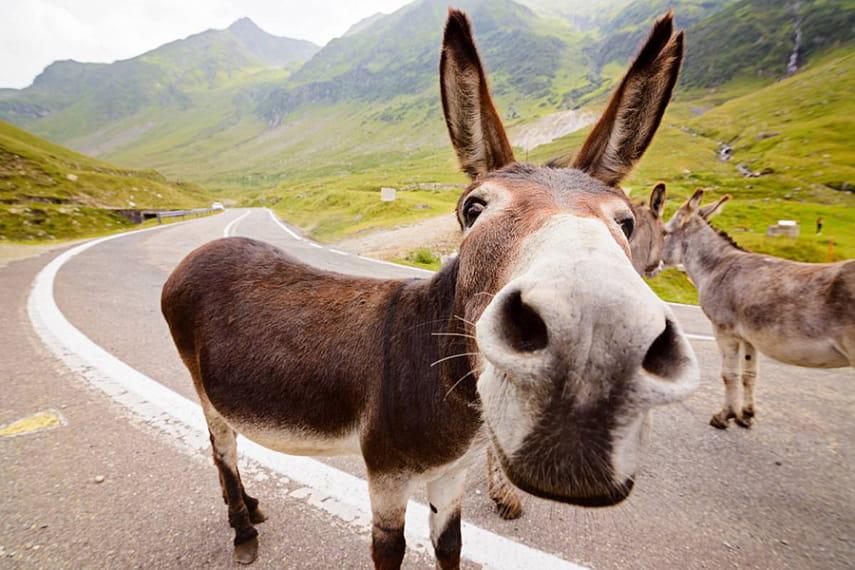 Фото с сайта duffeldonkey.com