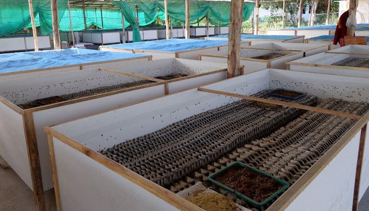 Сверчковая ферма в Тайланде. Фото с сайта turner.com
