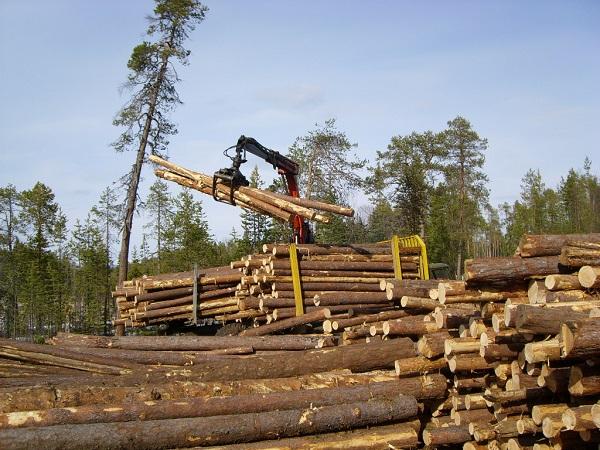 Фото с сайта sawwood.ru