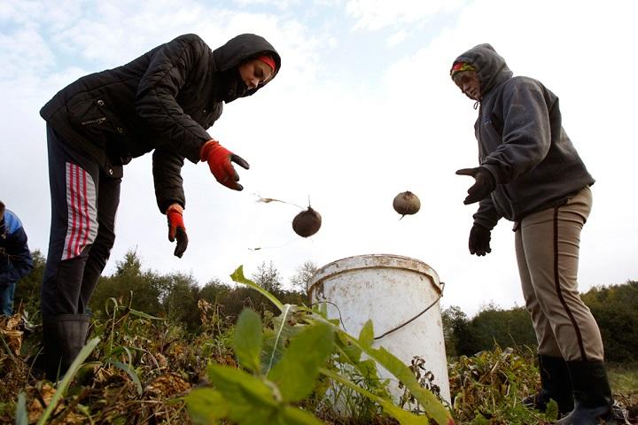 Фото с сайта greenword.ru
