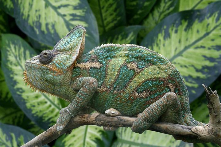 Фото с сайта rama909.livejournal.com